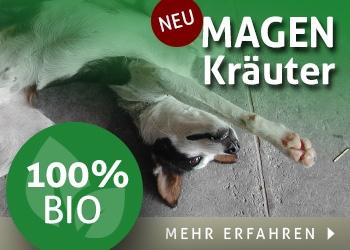 Bio Magen Kräuter